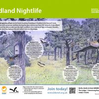 'Woodland Nightlife' bat id panel for Berks, Bucks and Oxon Wildlife Trust