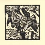 'Cormorant'