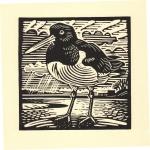 'Oystercatcher'