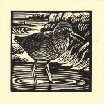 'Redshank'