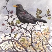 Blackbird-Naze-7