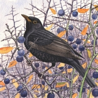 Blackbird & Sloes