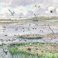 Minsmere: Spring ('a good day on the Scrape')