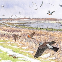 Minsmere: Winter