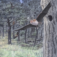 BBOWT-Bats-R
